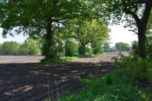Blick über Felder und Knicks